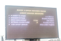 Race 3 - Young Horse Maiden